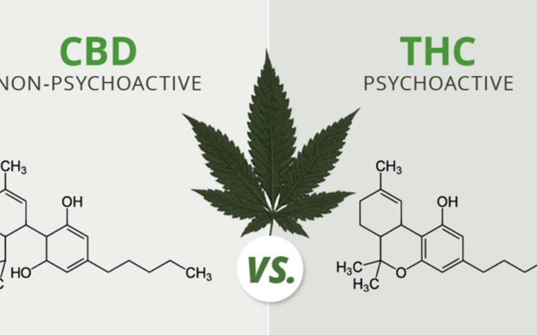 Cannabinoids: what are they, how do they work, and the difference between CBD and THC